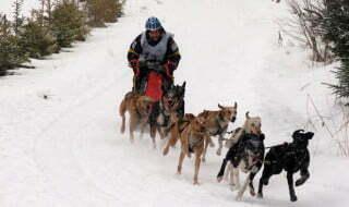 Wyścigi psich zaprzęgów / fot. Aneta Jamroży