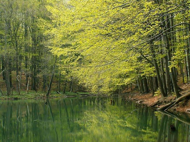 Fot. maliszczaki/cc/flickr.com