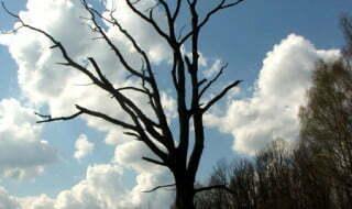 Drzewo wisielca. Fot. Marcin Jeżowski