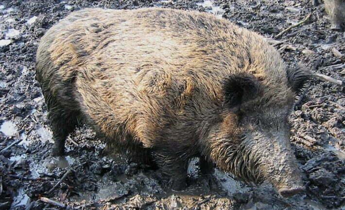 Fot. GerardM/wikimedia.org