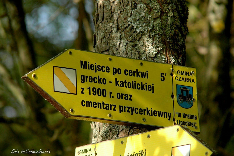 Lipie / fot. Lidia Tul-Chmielewska