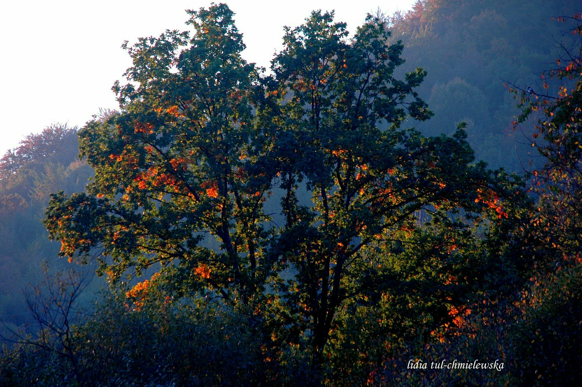 Jesień w Bieszczadach / fot. Lidia Tul-Chmielewska