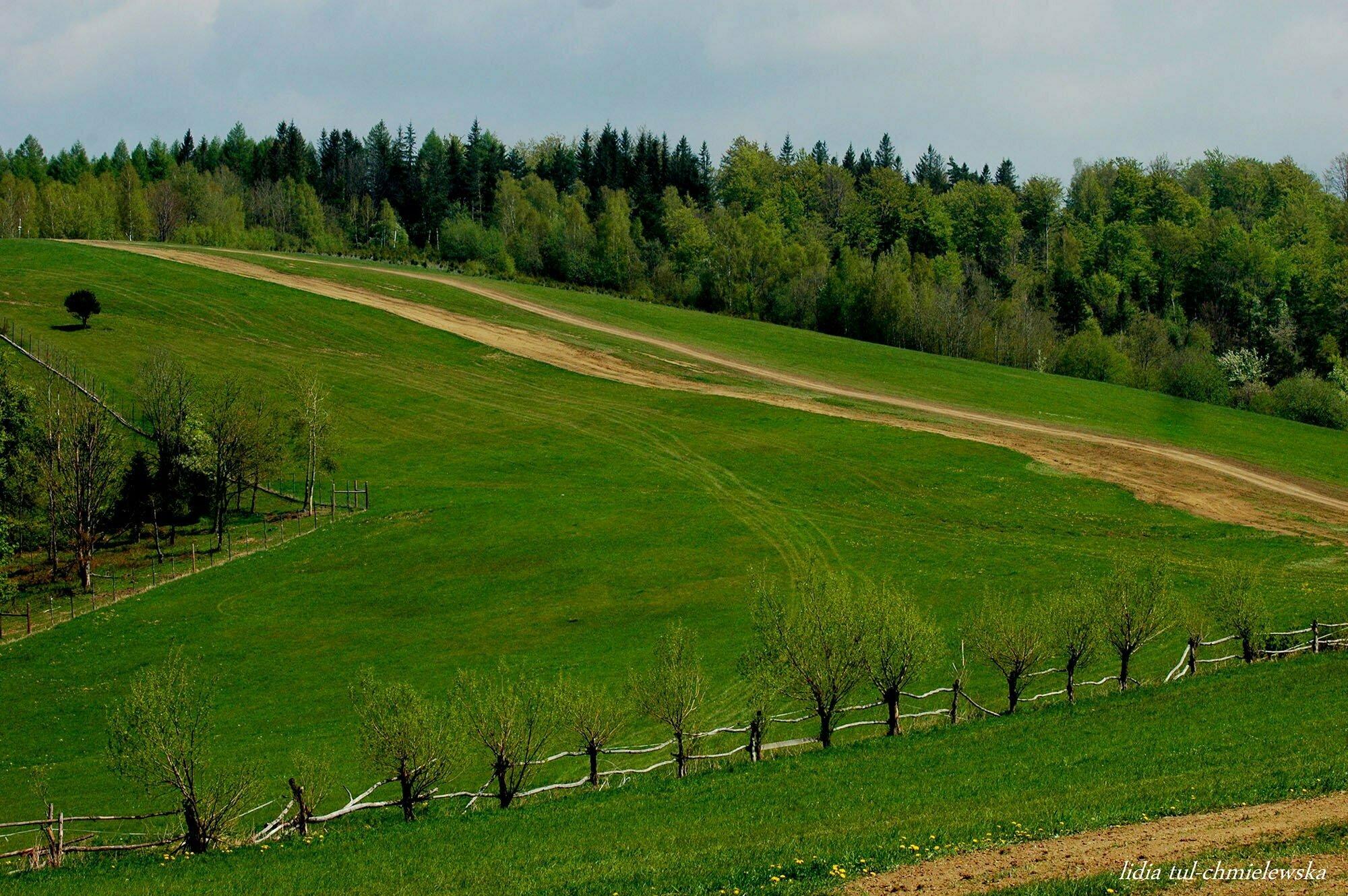 Rośliny w Bieszczadach / fot. Lidia Tul-Chmielewska