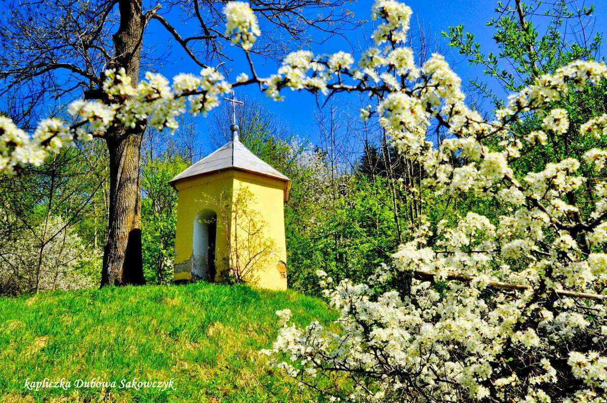 Kapliczka Dubowa Sakowczyk / fot. Lidia Tul-Chmielewska