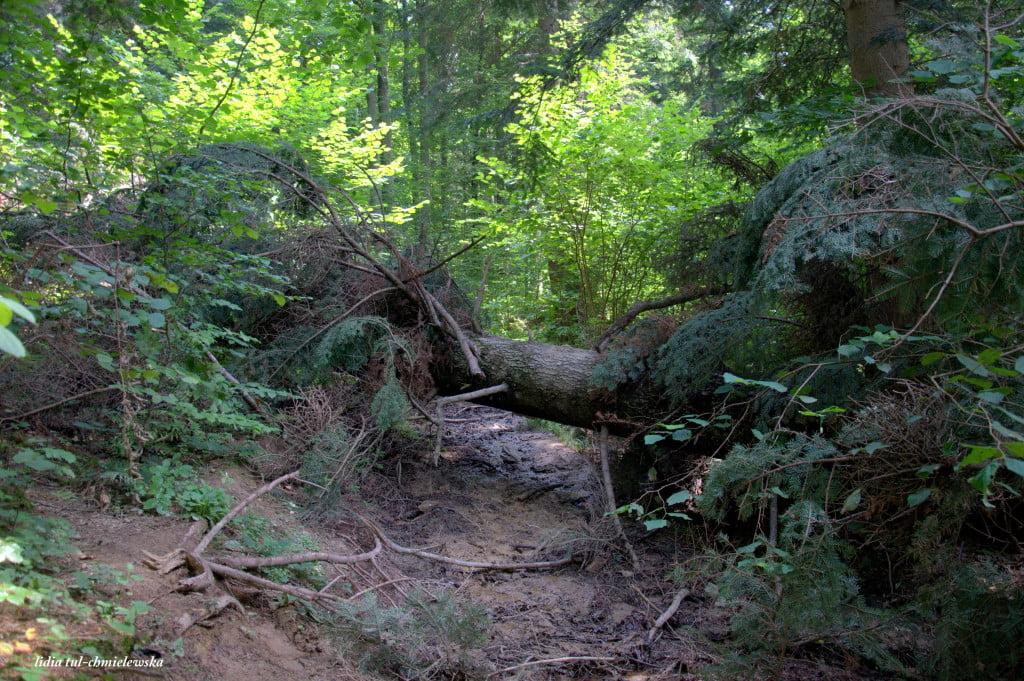 droga na Dwernik Kamień