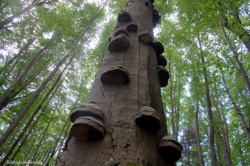 W lesie fot/Lidia Tul-Chmielewska