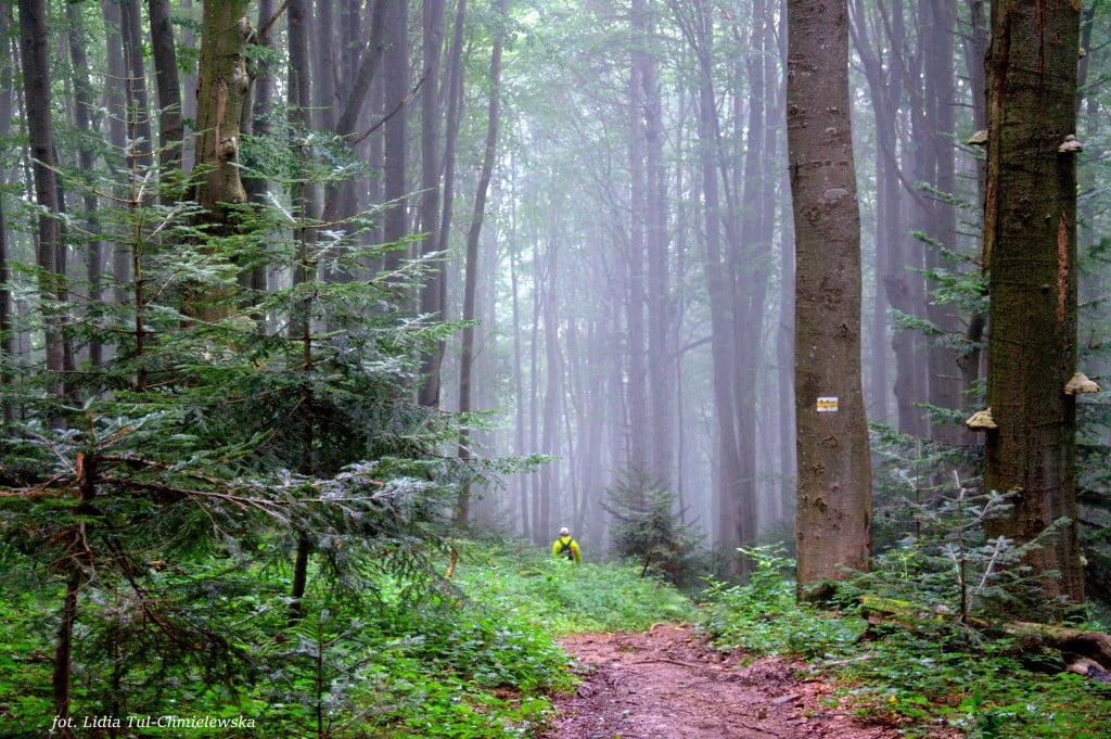 Na leśnym szlaku fot/Lidia Tul-Chmielewska