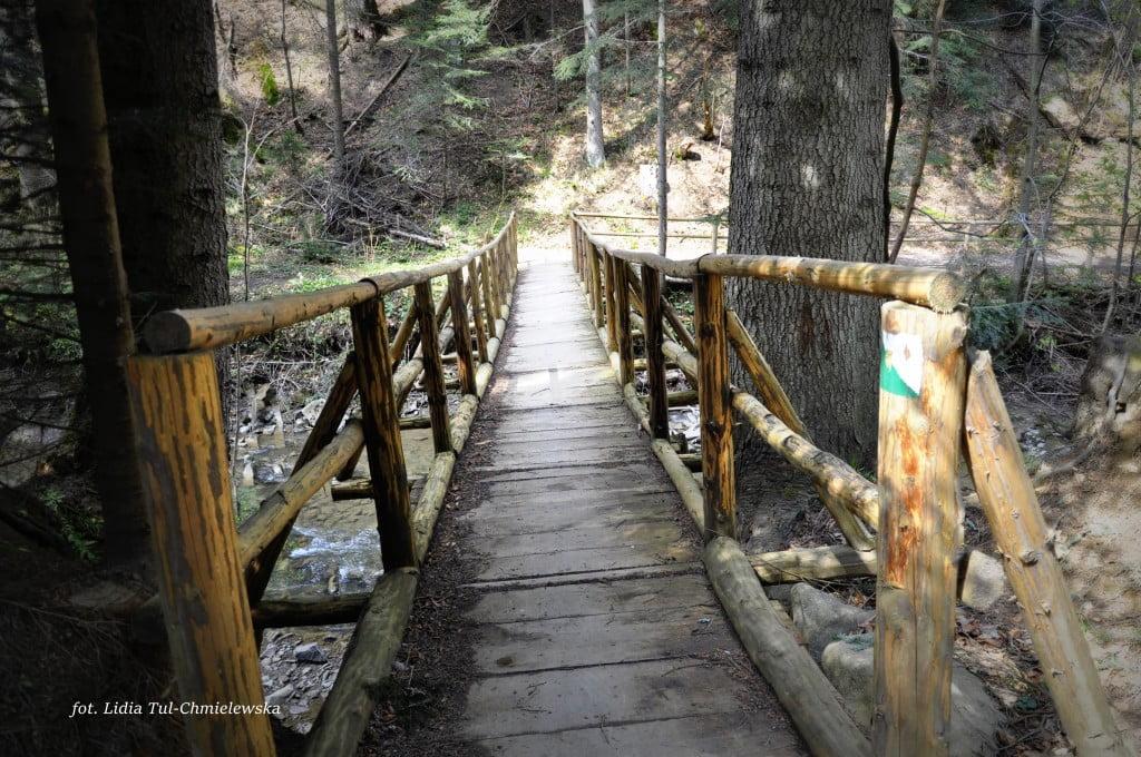 Ścieżki przyrodnicze w lesie fot/Lidia Tul-Chmielewska