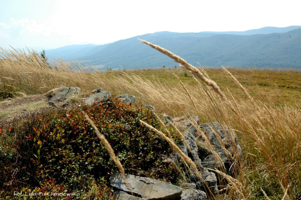 Falujące trawy Połonin- fot. Lidia Tul-Chmielewska