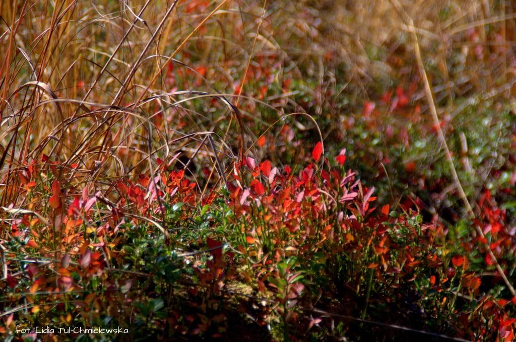 Środowisko roślinne w Tarnawie fot. Lidia Tul-Chmielewska