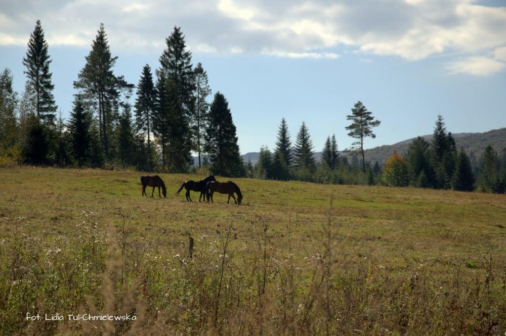 Konie w Tarnawie fot. Lidia Tul-Chmielewska