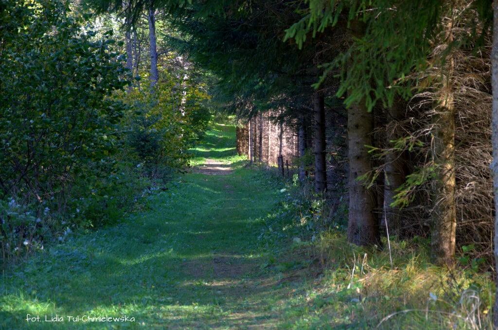 Droga leśna do Brenzberg fot. Lidia Tul-Chmielewska