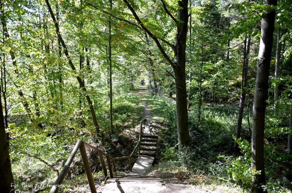 Uskok na stoku ścieżki Brenzberg fot. Lidia Tul-Chmielewska