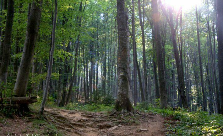 W bukowym lesie / fot. Lidia Tul-Chmielewska