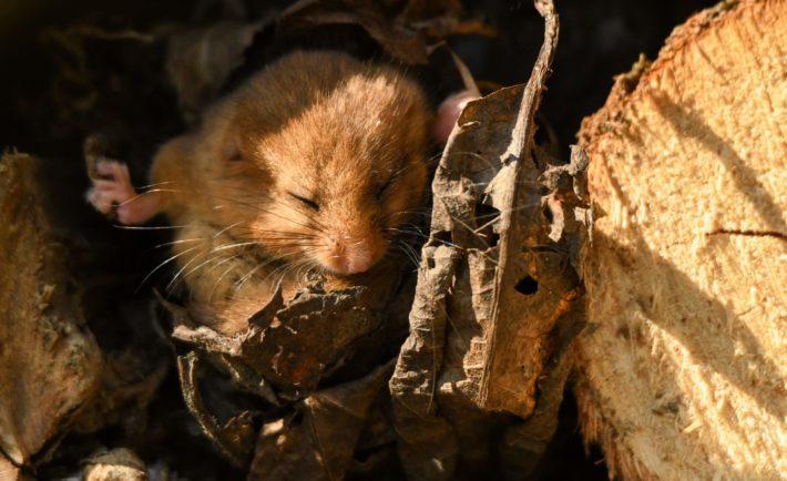 Myszka budzi się z zimowego snu / fot. shutterstock.com