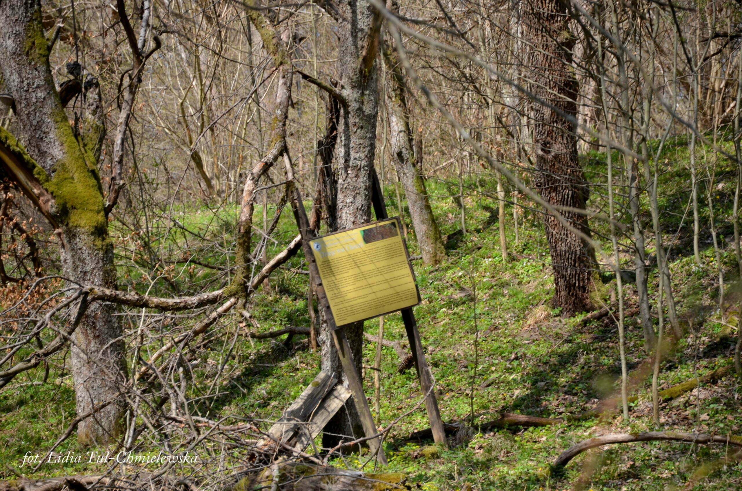 Choceń - jedna z tablic informacyjnych / fot. Lidia Tul-Chmielewska