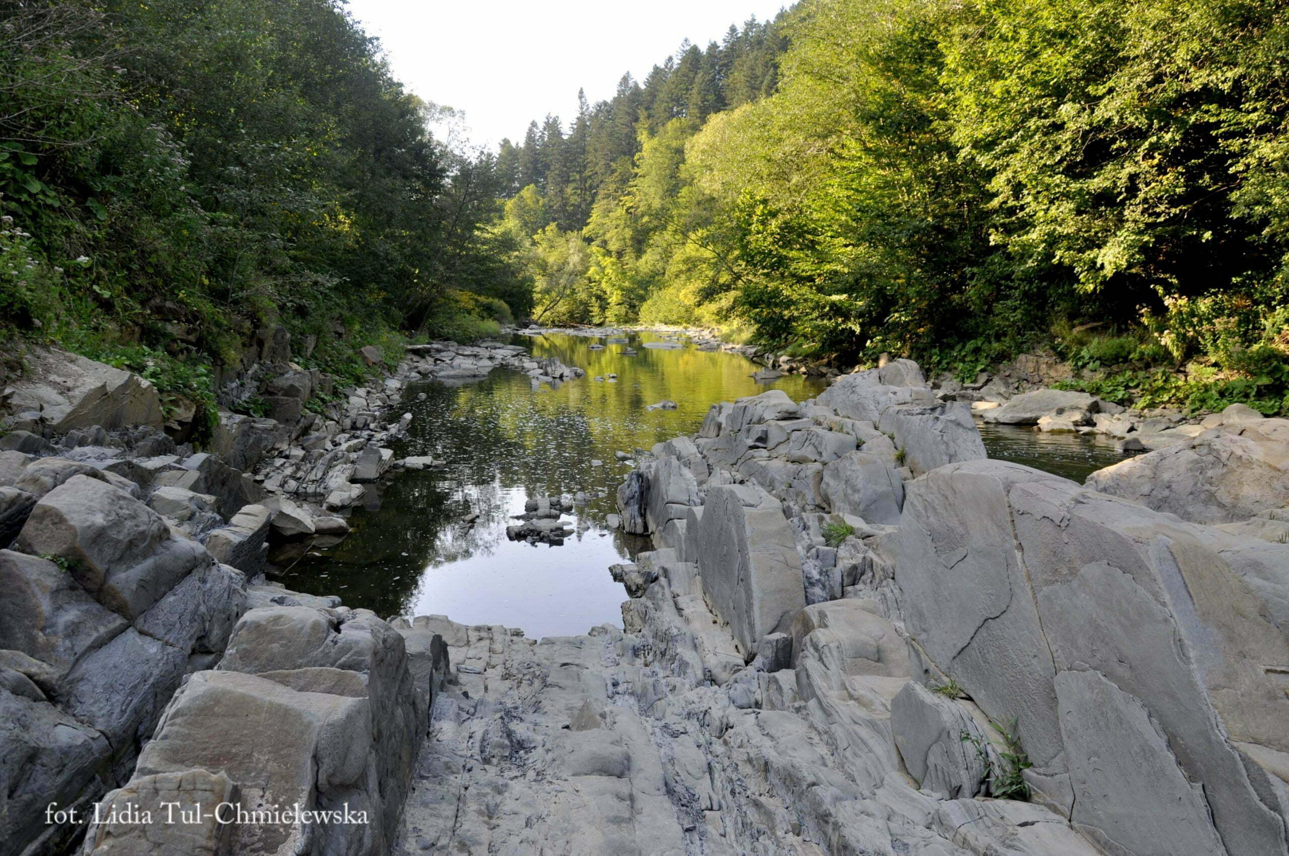 Progi skalne na potoku  / fot. Lidia Tul-Chmielewska