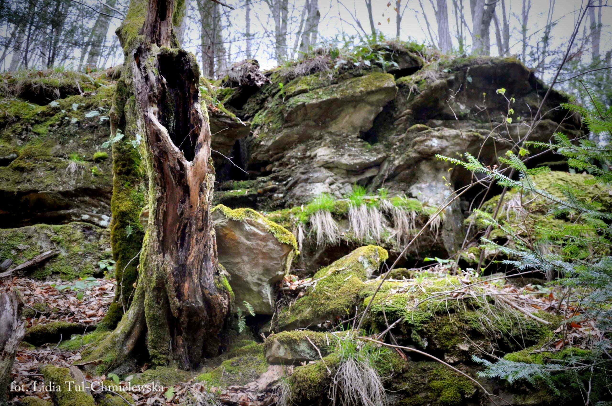 Rezerwat Sine Wiry / fot. Lidia Tul-Chmielewska