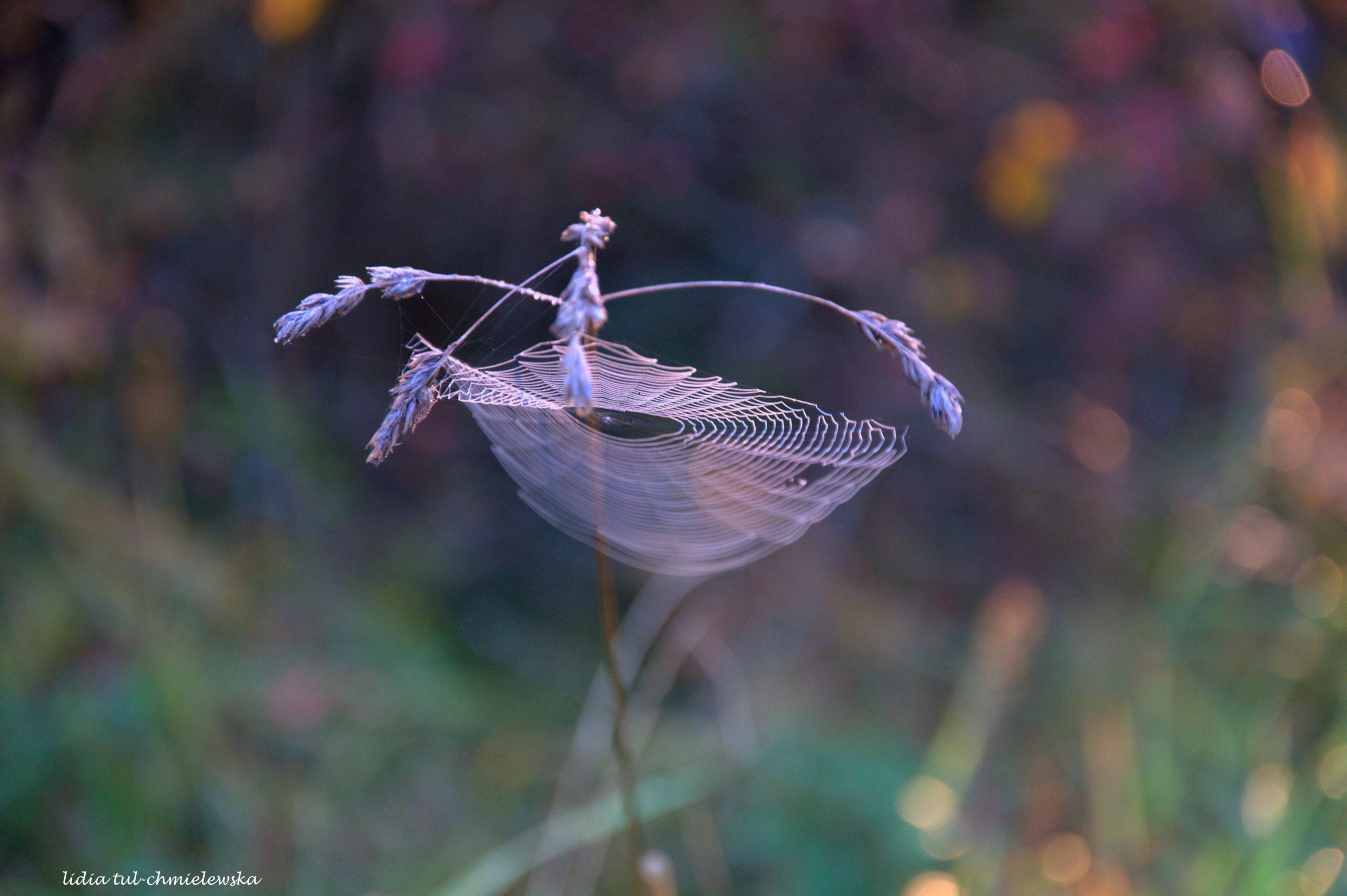 Baletnica/ fot. Lidia Tul-Chmielewska