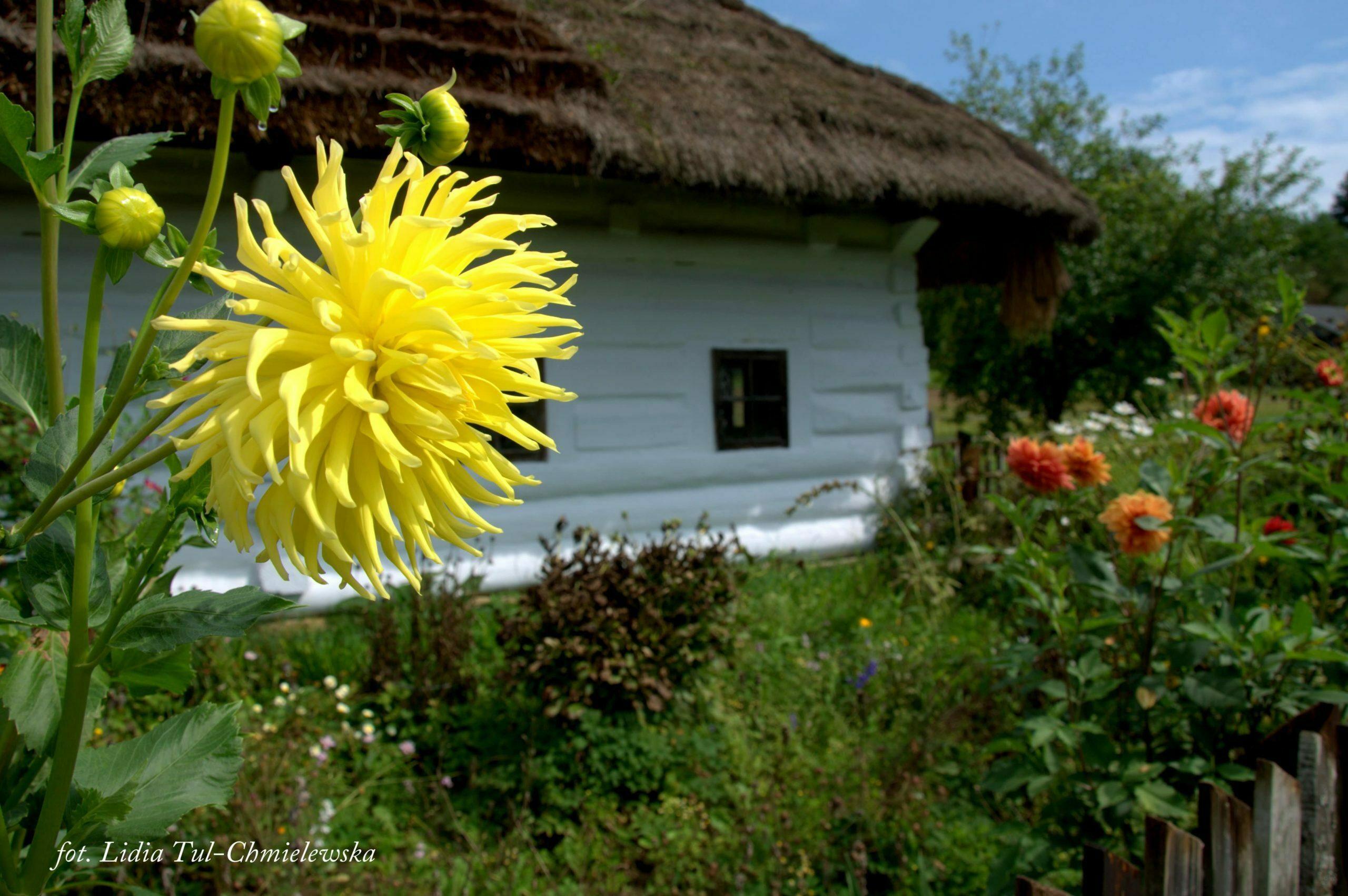 Chata i kwiat/ fot. Lidia Tul-Chmielewska