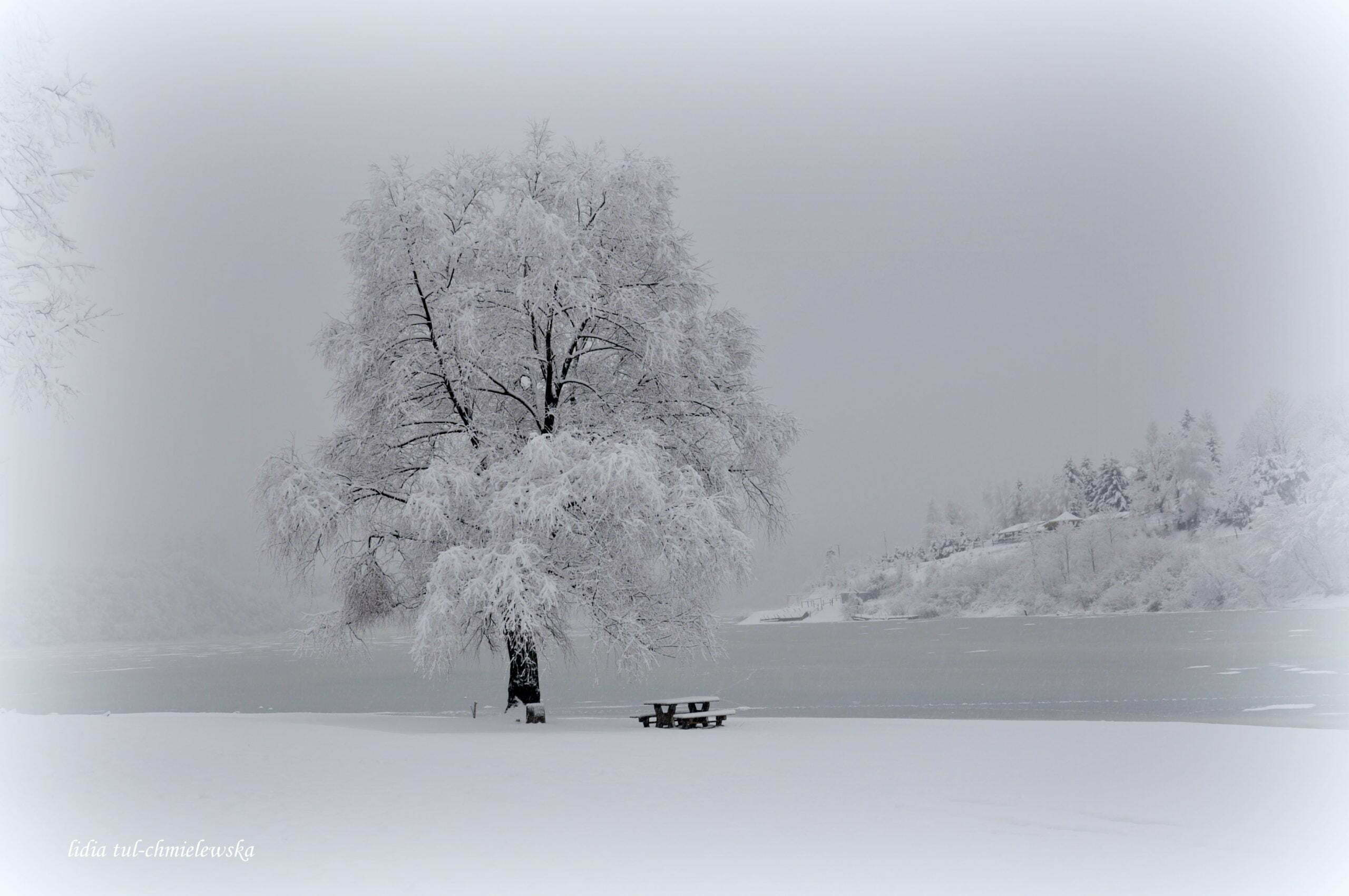 Czarno i biało/fot. Lidia Tul-Chmielewska