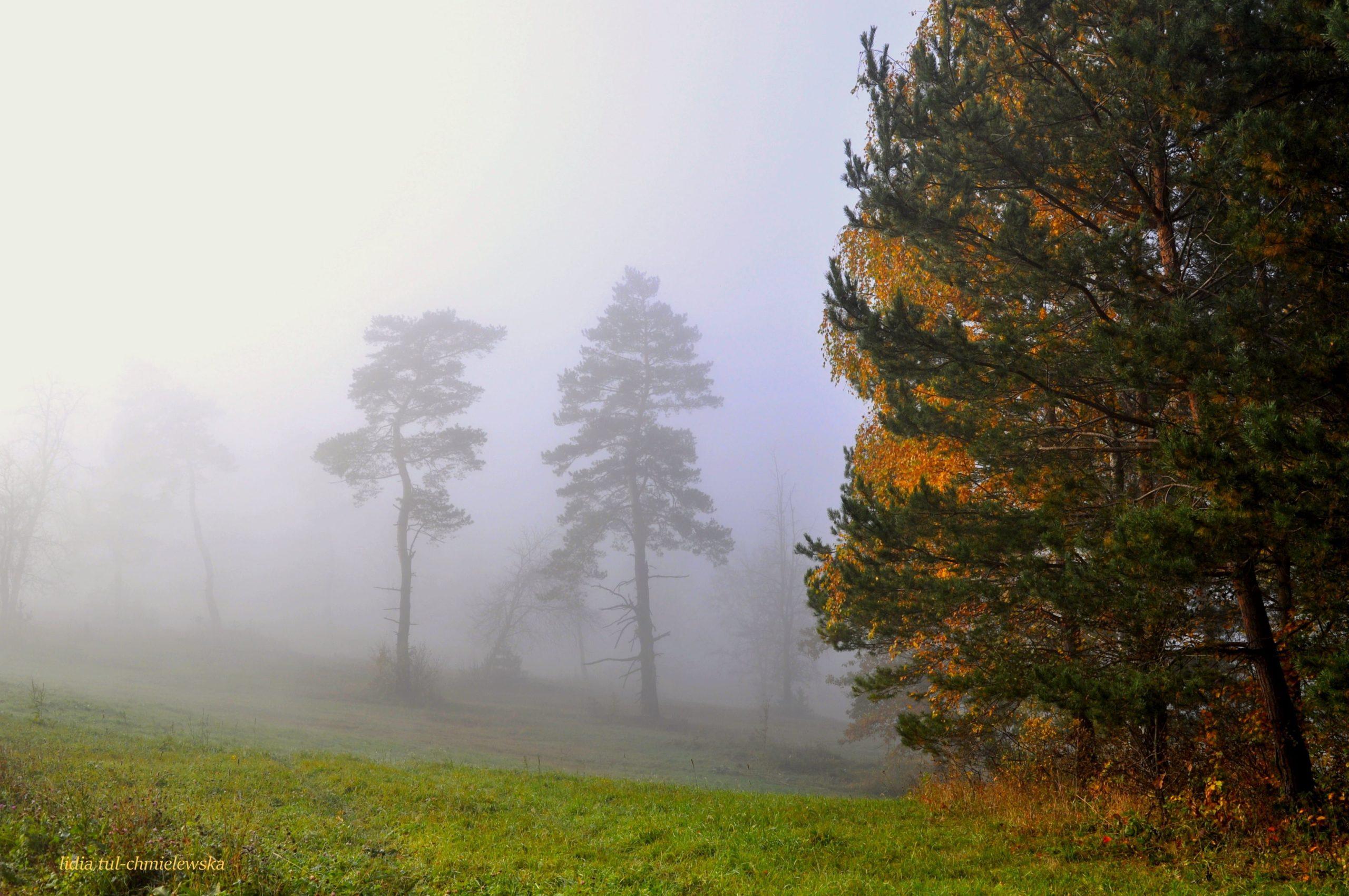 Mgła i tańczące drzewa/ fot. Lidia Tul-Chmielewska