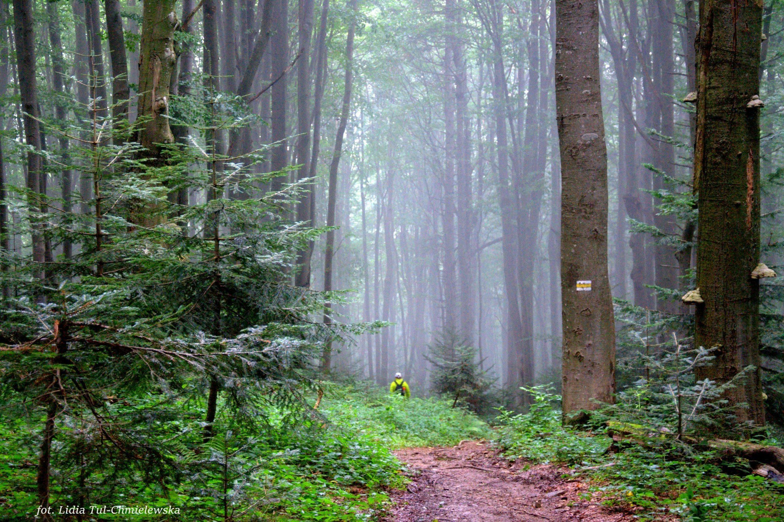 Mgła w lesie/ fot. Lidia Tul-Chmielewska
