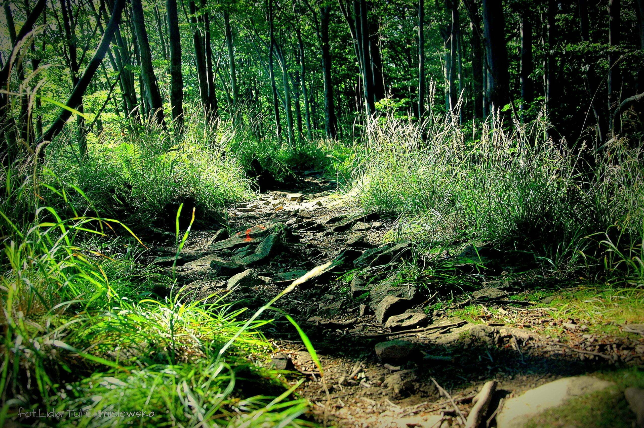 Ścieżka w lesie/ fot. Lidia Tul-Chmielewska