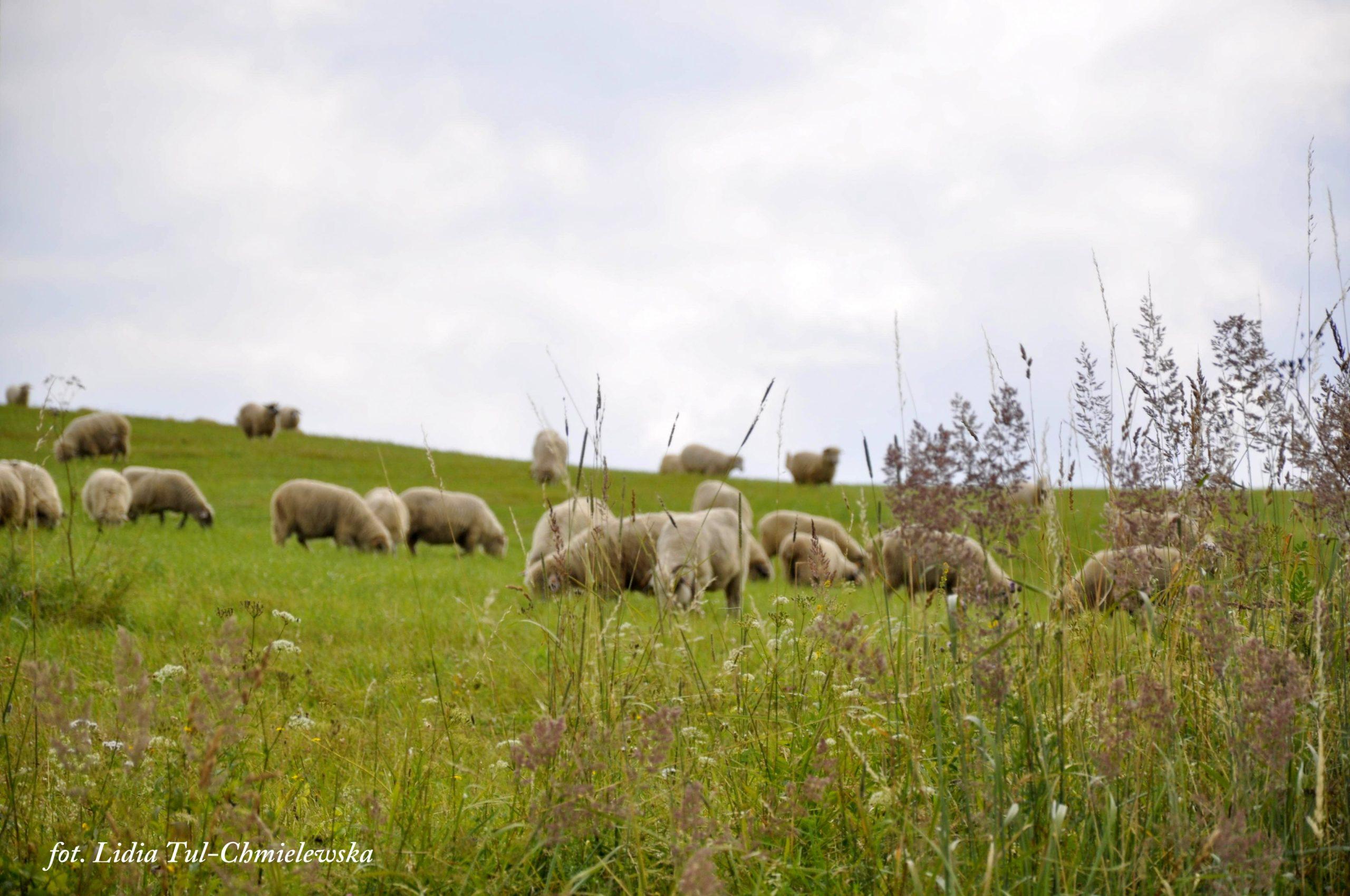 Sielskie widoki z okolic Komańczy / fot. Lidia Tul-Chmielewska