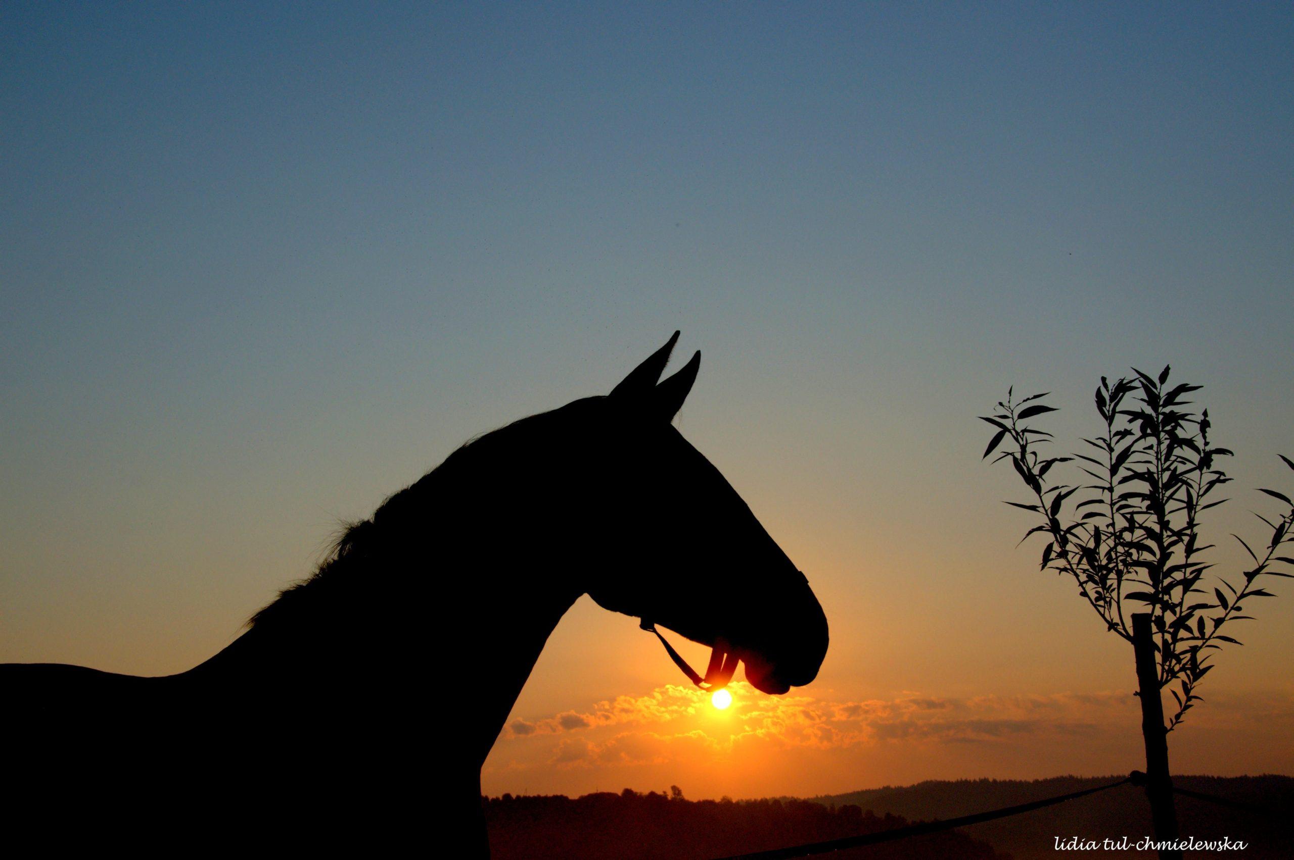 Swiatło i koń/fot. Lidia Tul-Chmielewska