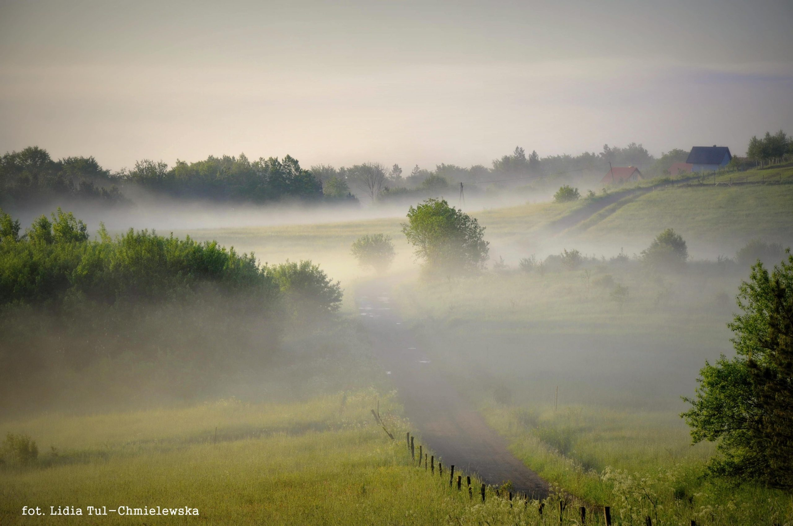 Świtania/ fot. Lidia Tul-Chmielewska