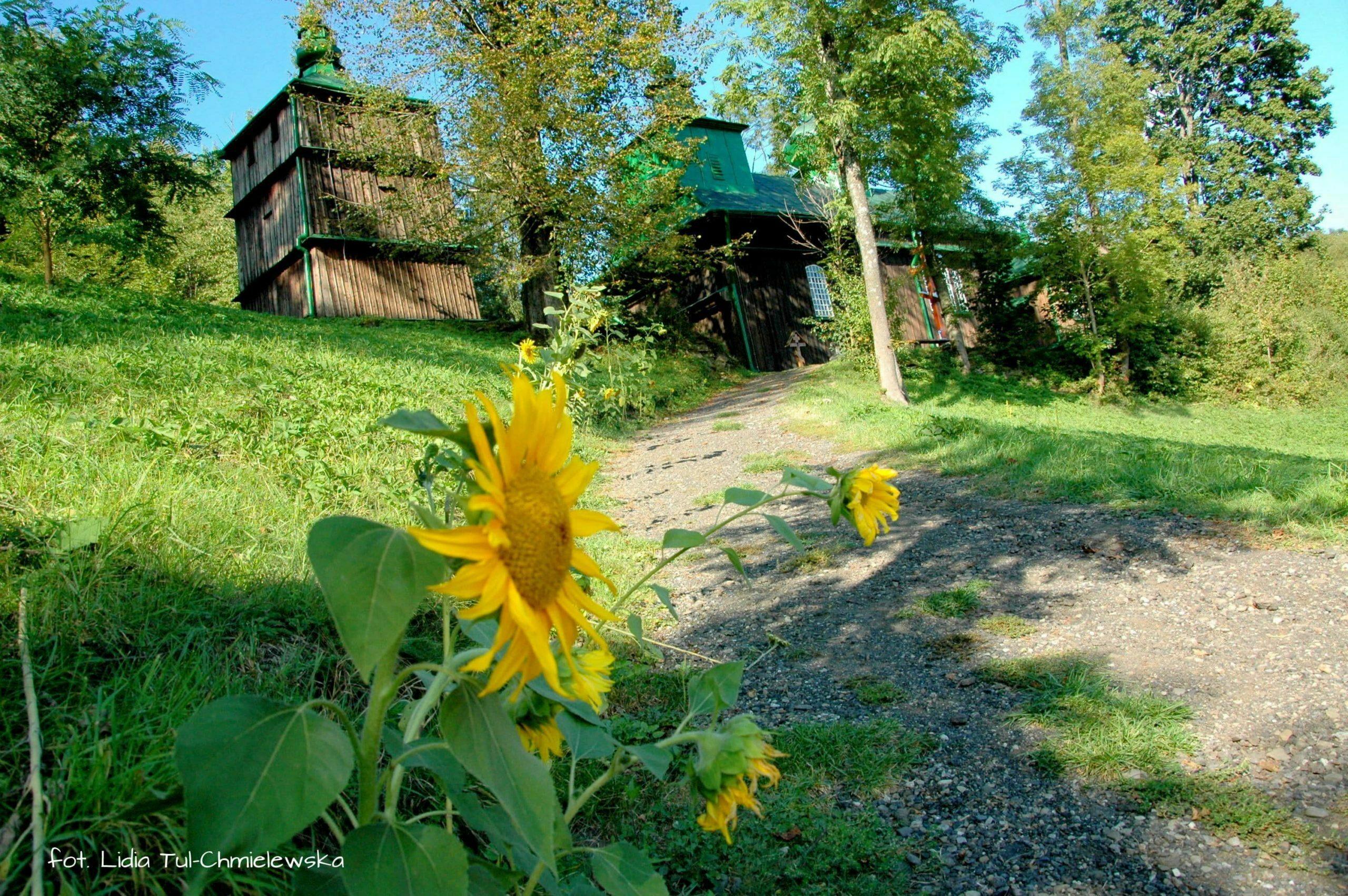 Szczawne ze słonecznikiem/ fot. Lidia Tul-Chmielewska