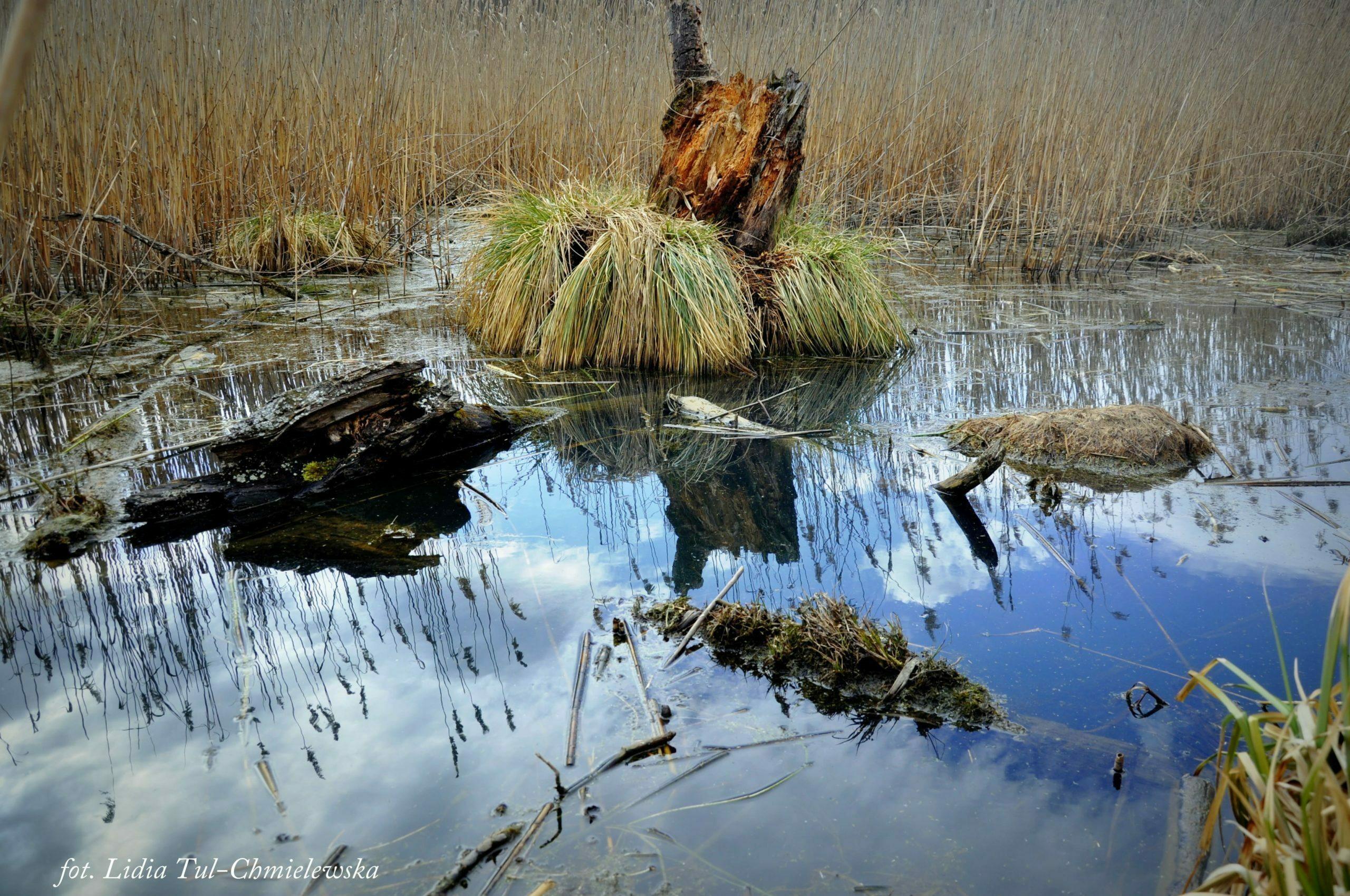 Woda i niebo w niej/ fot. Lidia Tul-Chmielewska