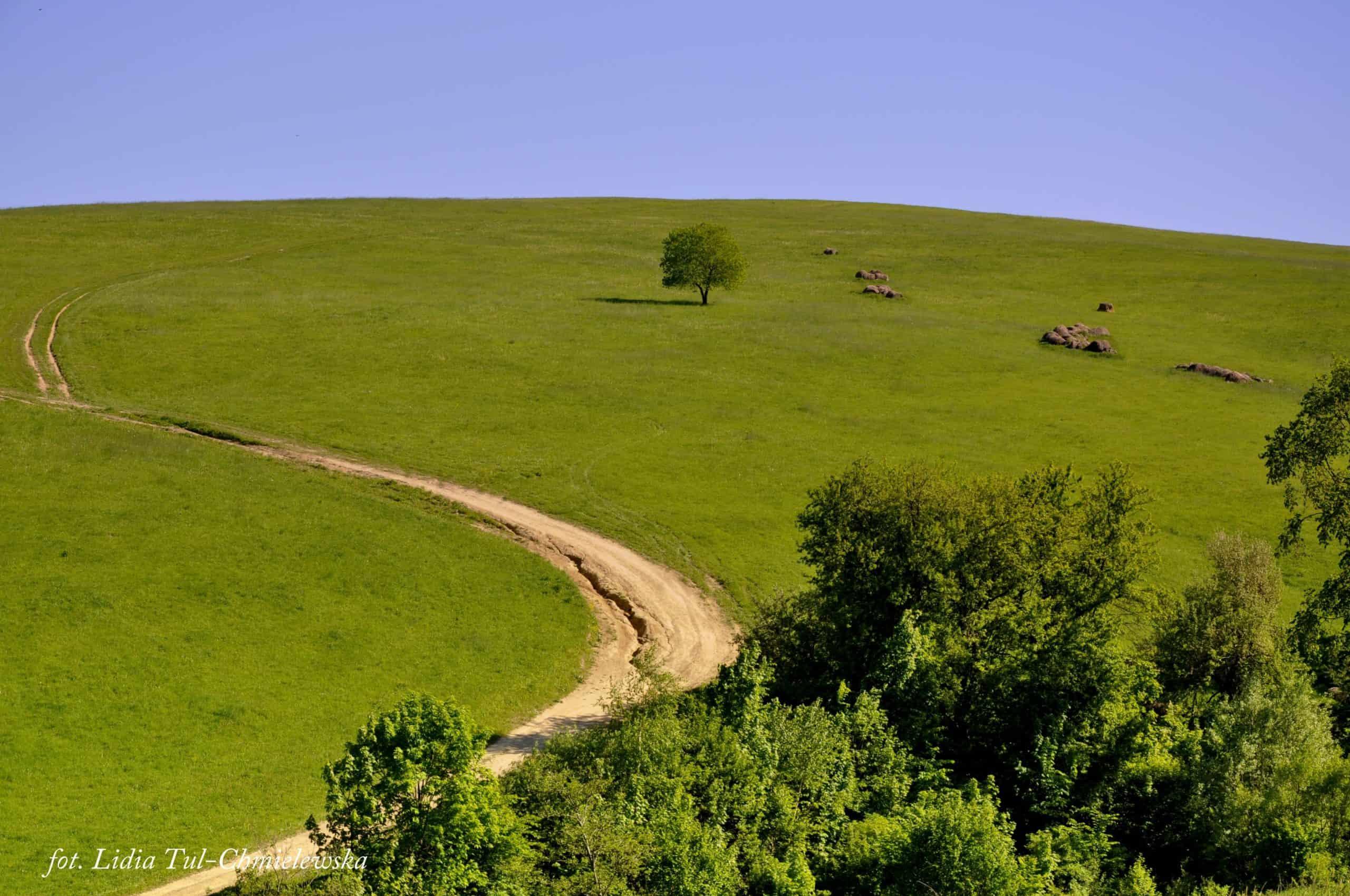 Zielono i niebiesko /fot. Lidia Tul-Chmielewska