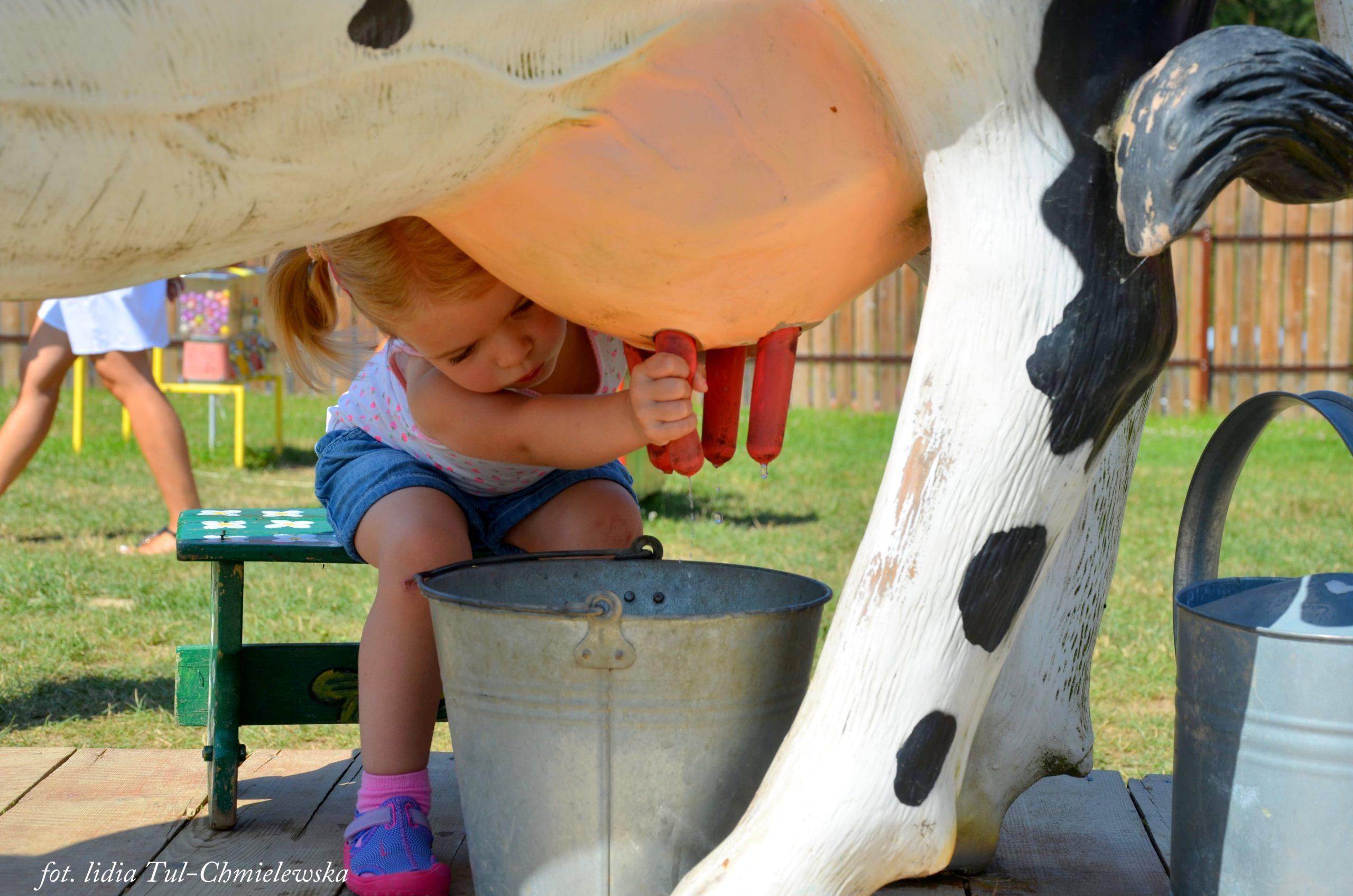 Wiejskie zoo dojenie krowy sztucznej fot. Lidia Tul-Chmielewska