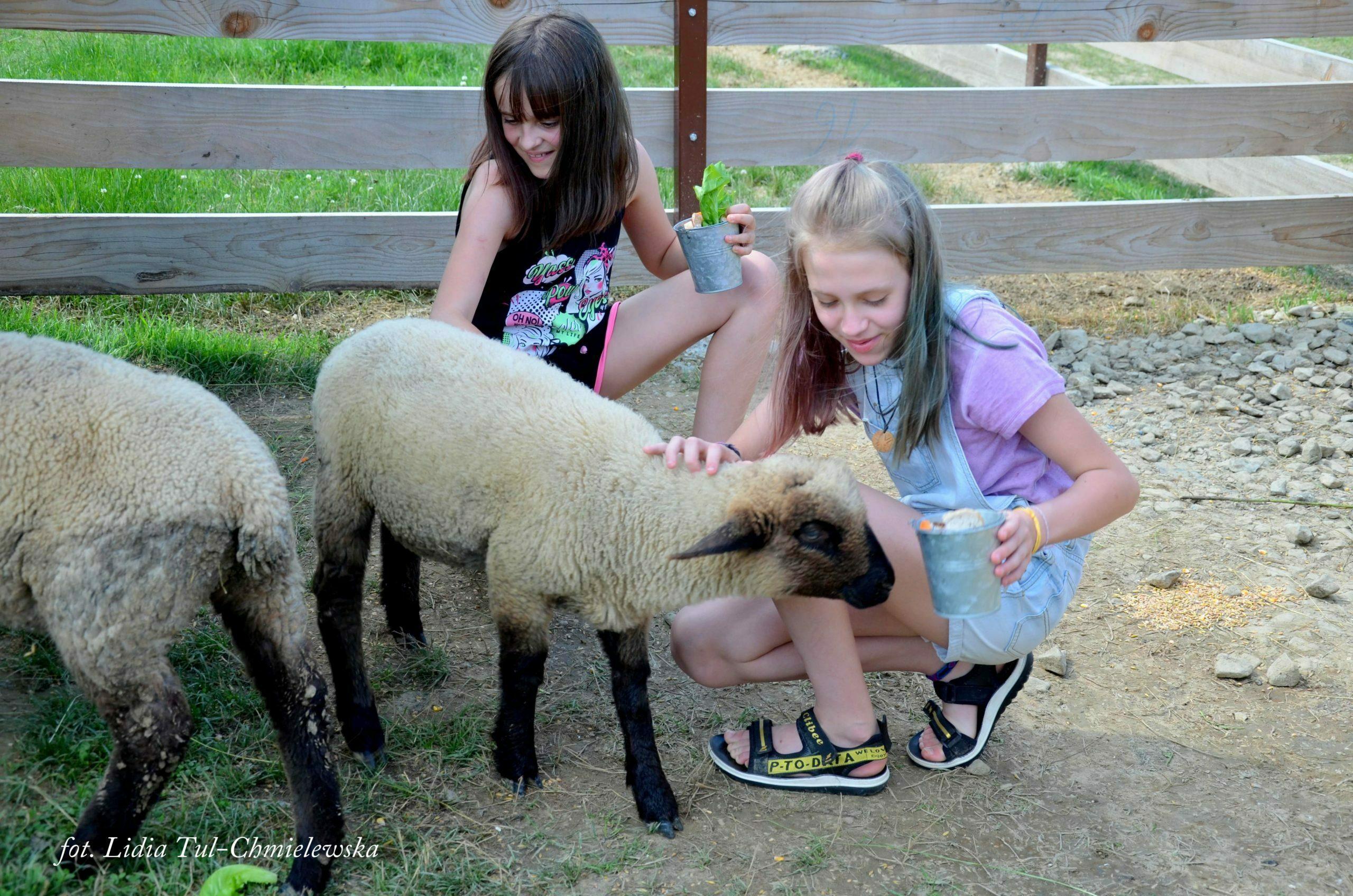 Wiejskie zoo i owieczki fot. Lidia Tul-Chmielewska