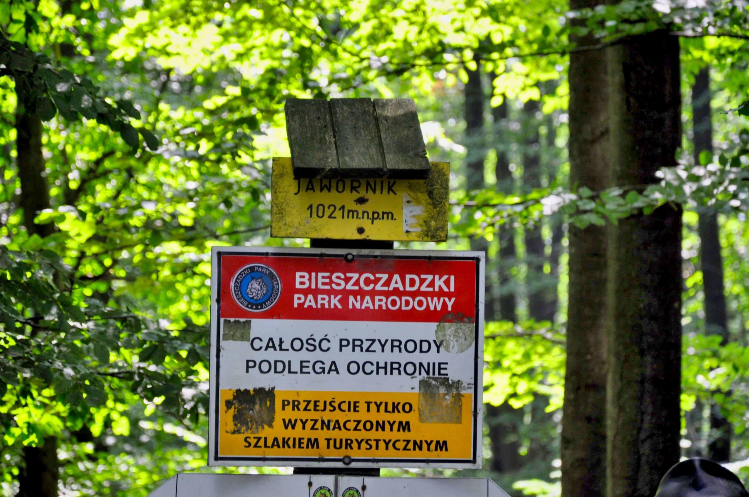 Jawornik / fot. Lidia Tul-Chmielewska_5