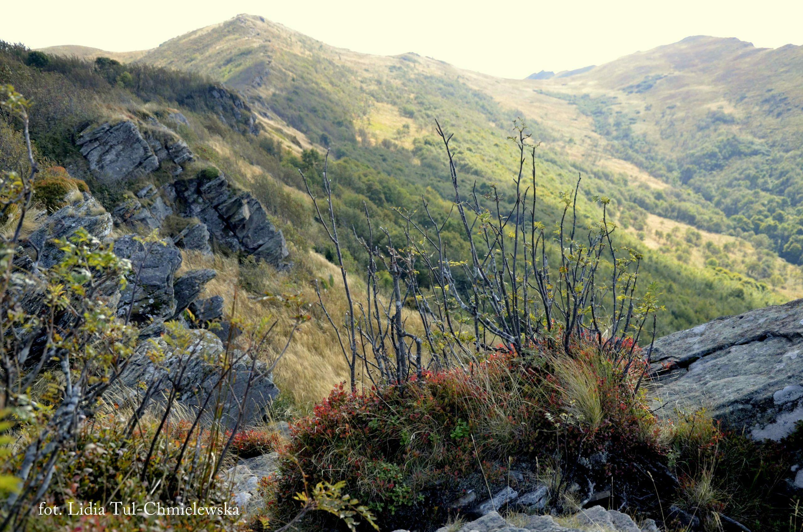 Barwy jesieni w Bieszczadach fot. Lidia Tul-Chmielewska