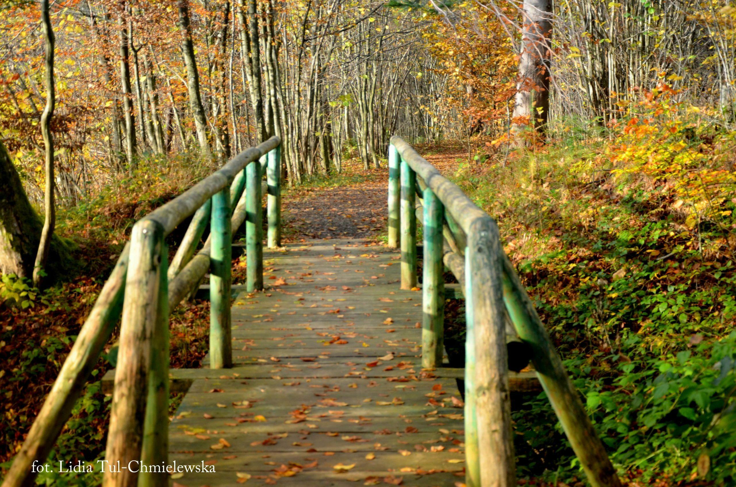 Bieszczady w listopadzie i kolory fot. Lidia Tul-Chmielewska