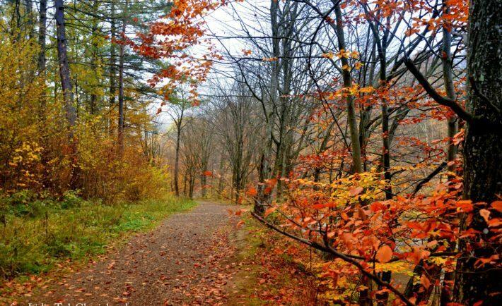Las jesienią w Bieszczadach / fot. Lidia Tul-Chmielewska