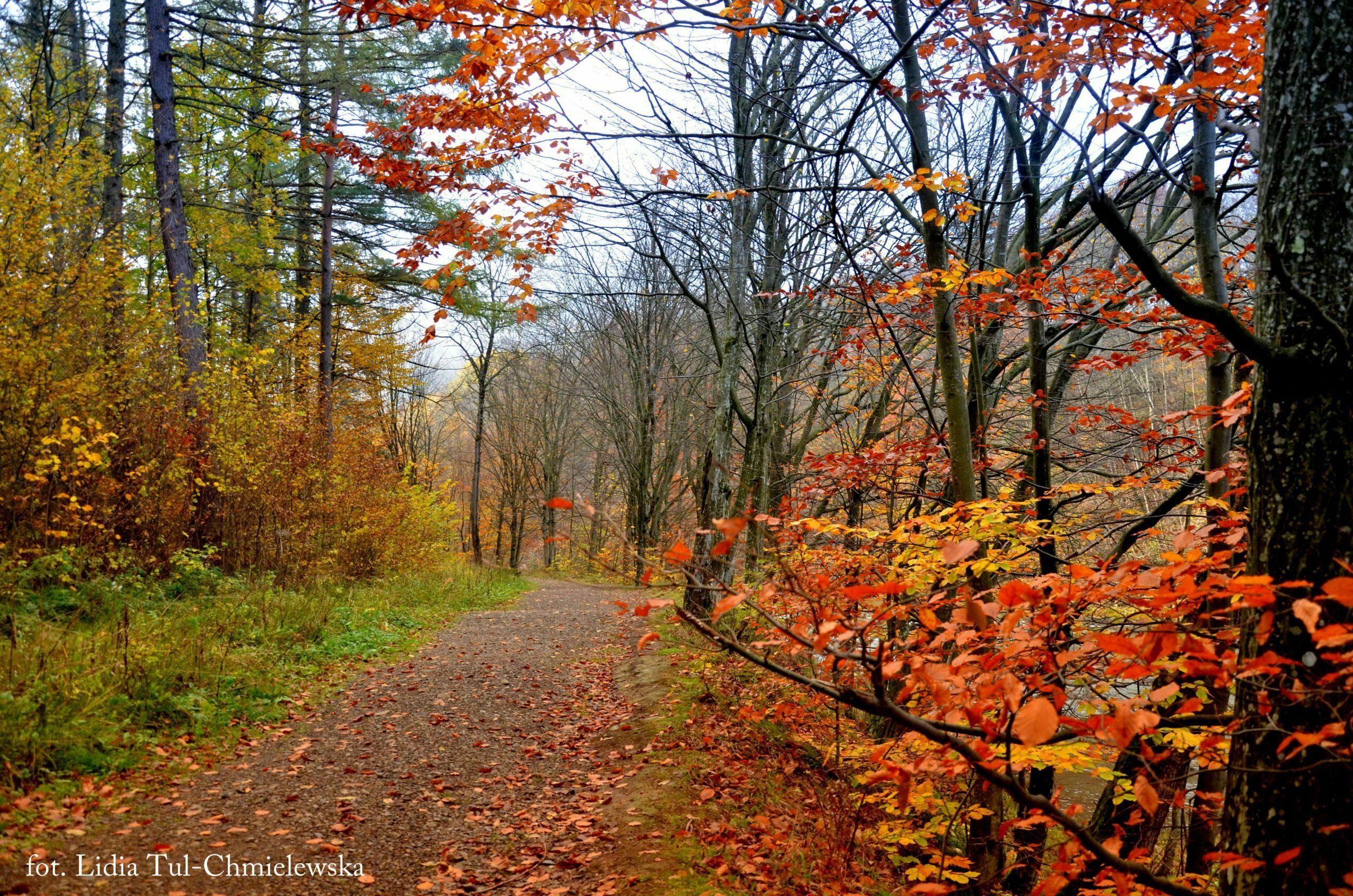 Las jesienią w Bieszczadach fot. Lidia Tul-Chmielewska