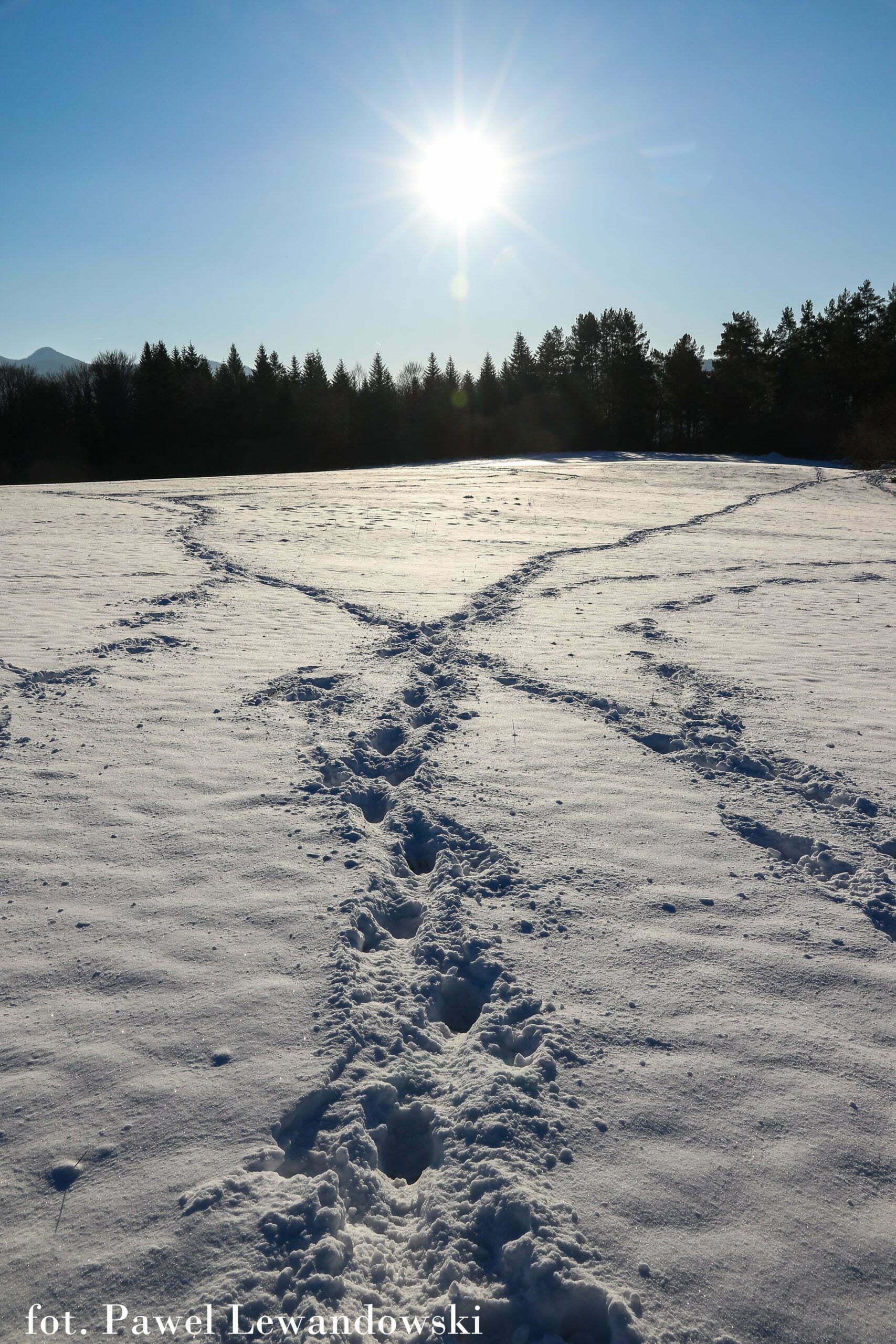 Życie lasu zimą fot. Paweł Lewandowski