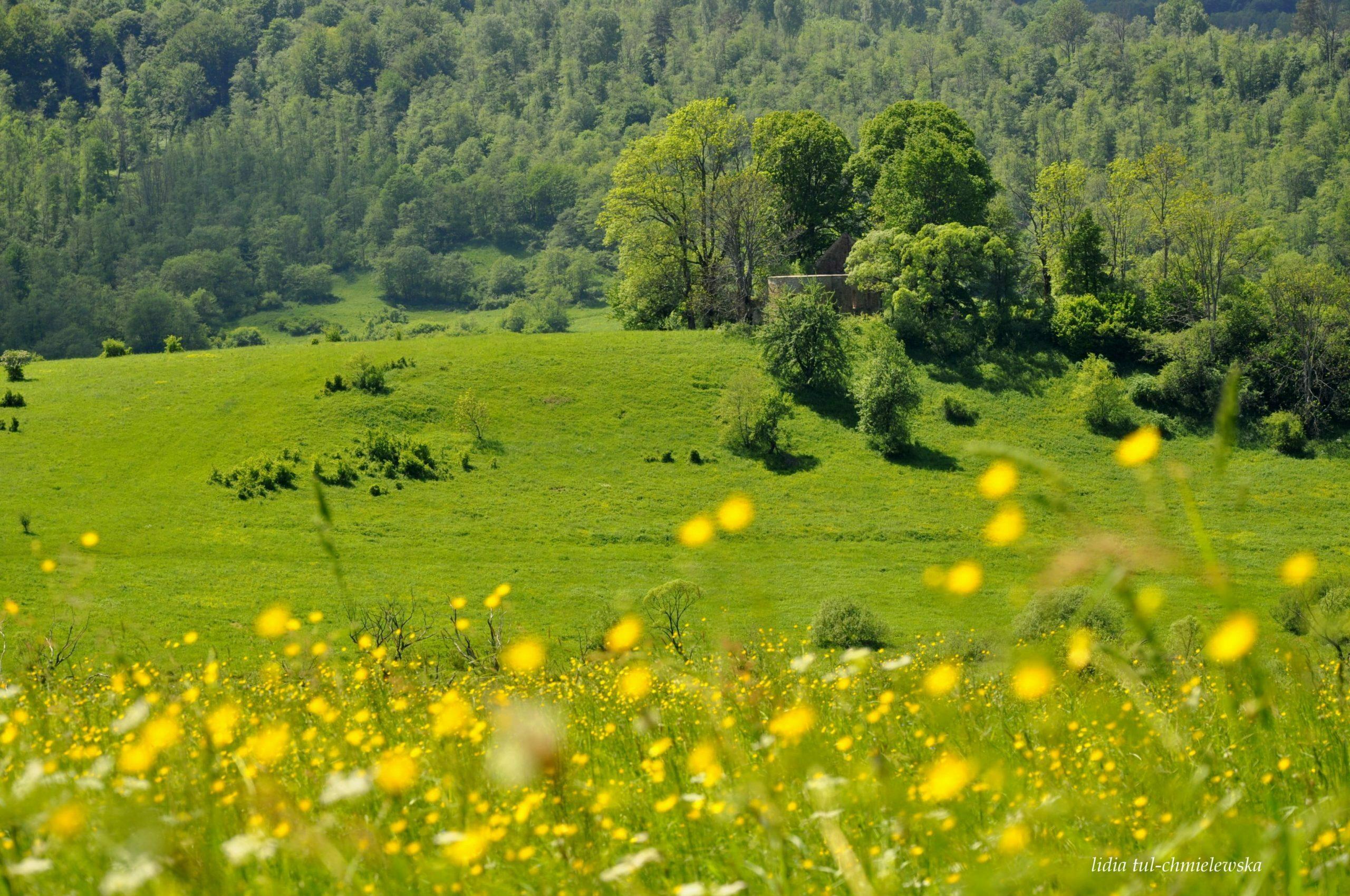 Nieistniejąca wieś Krywe fot. Lidia Tul-Chmielewska
