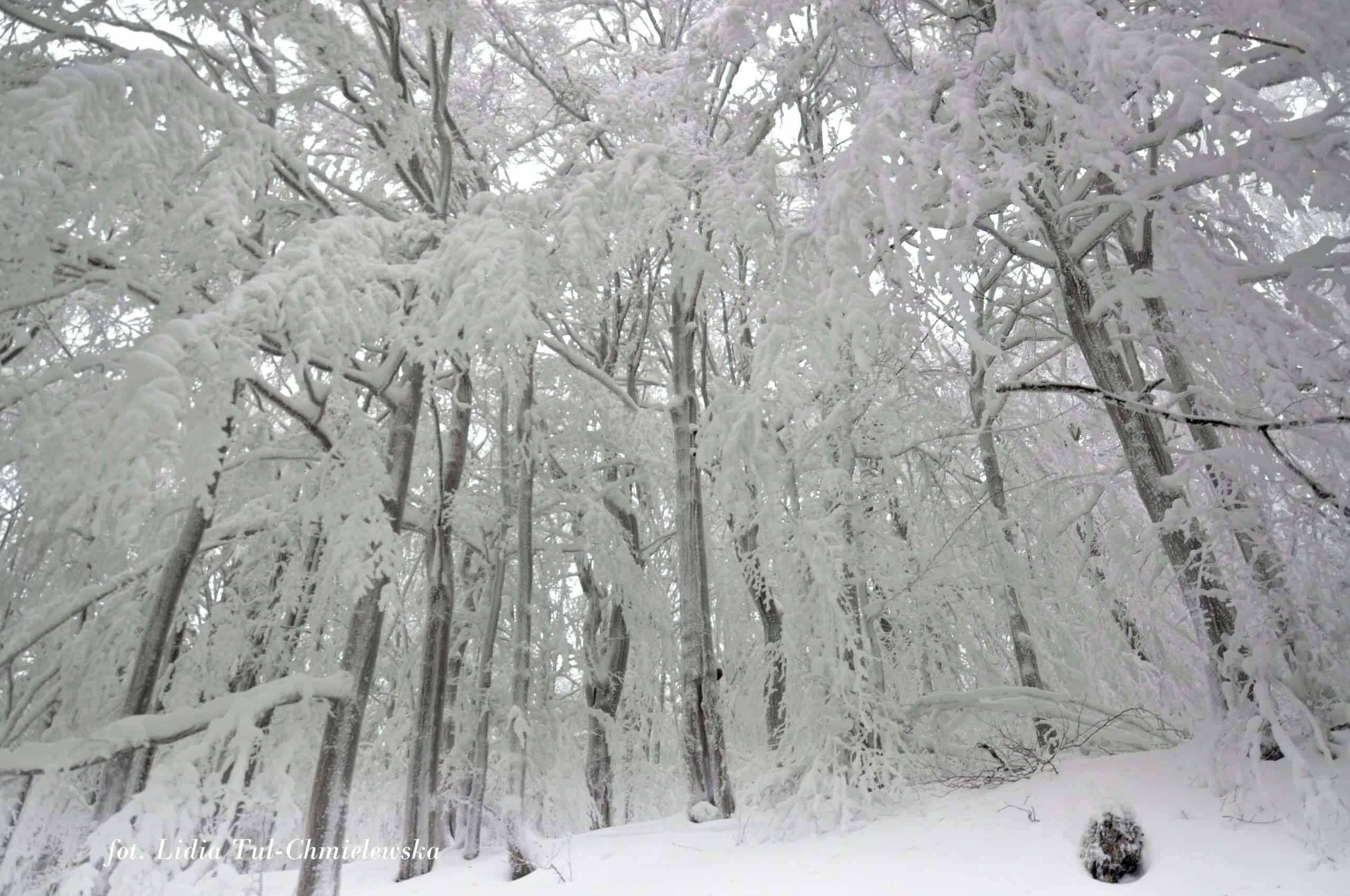 Piekno zimy w Bieszczadach fot. Lidia Tul-Chmielewska
