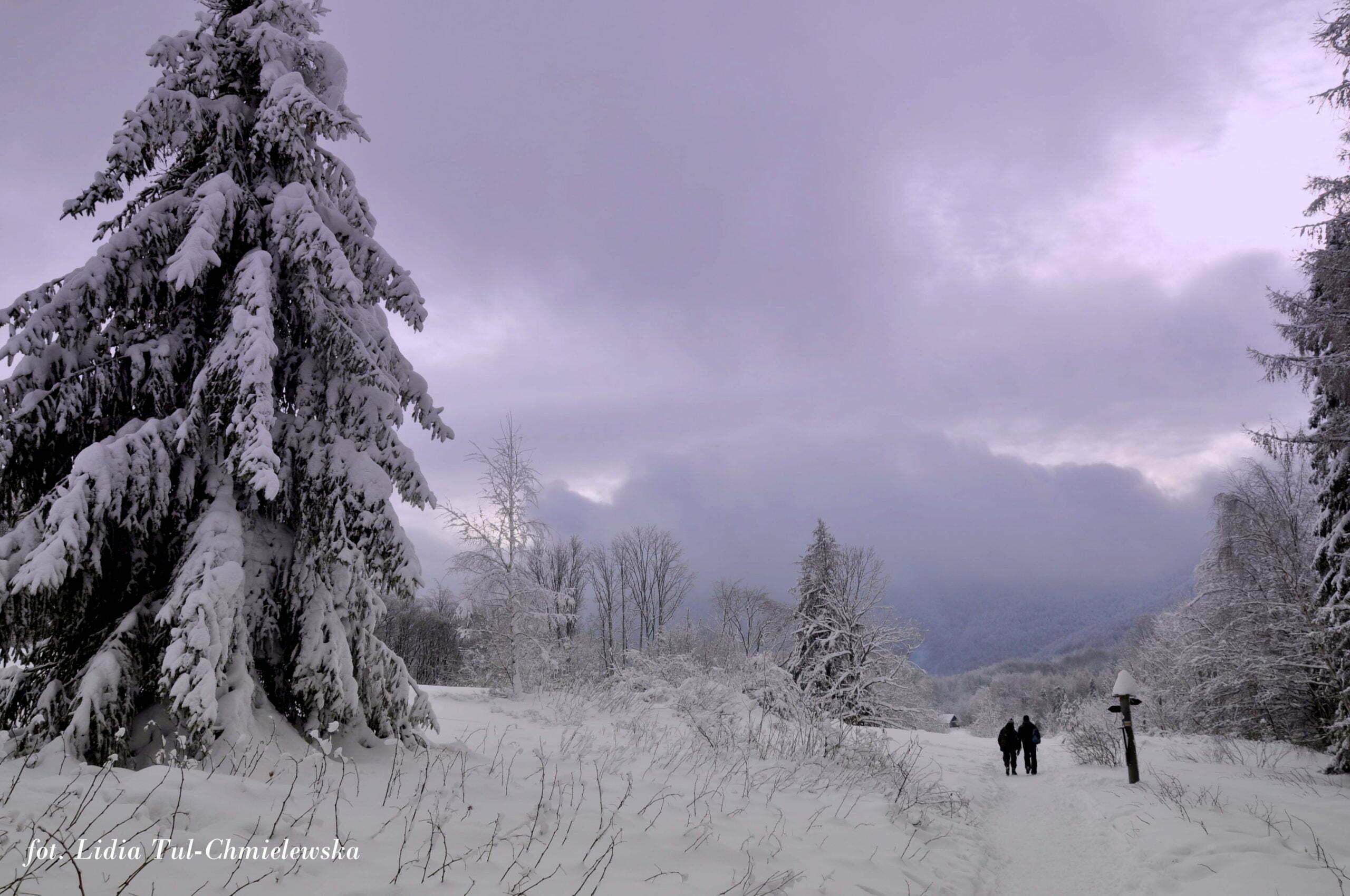 Zimowo w Bieszczadach / fot. Lidia Tul-Chmielewska