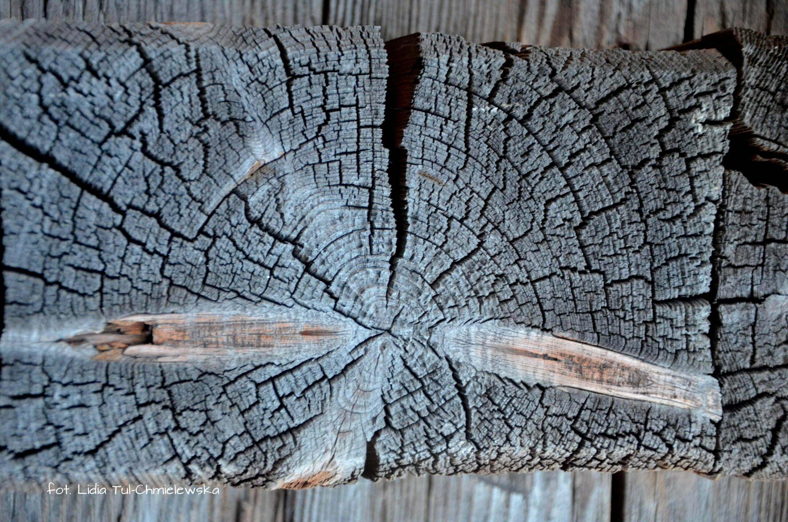Drewno cerkwi które przetrwało wieki fot. Lidia Tul-Chmielewska