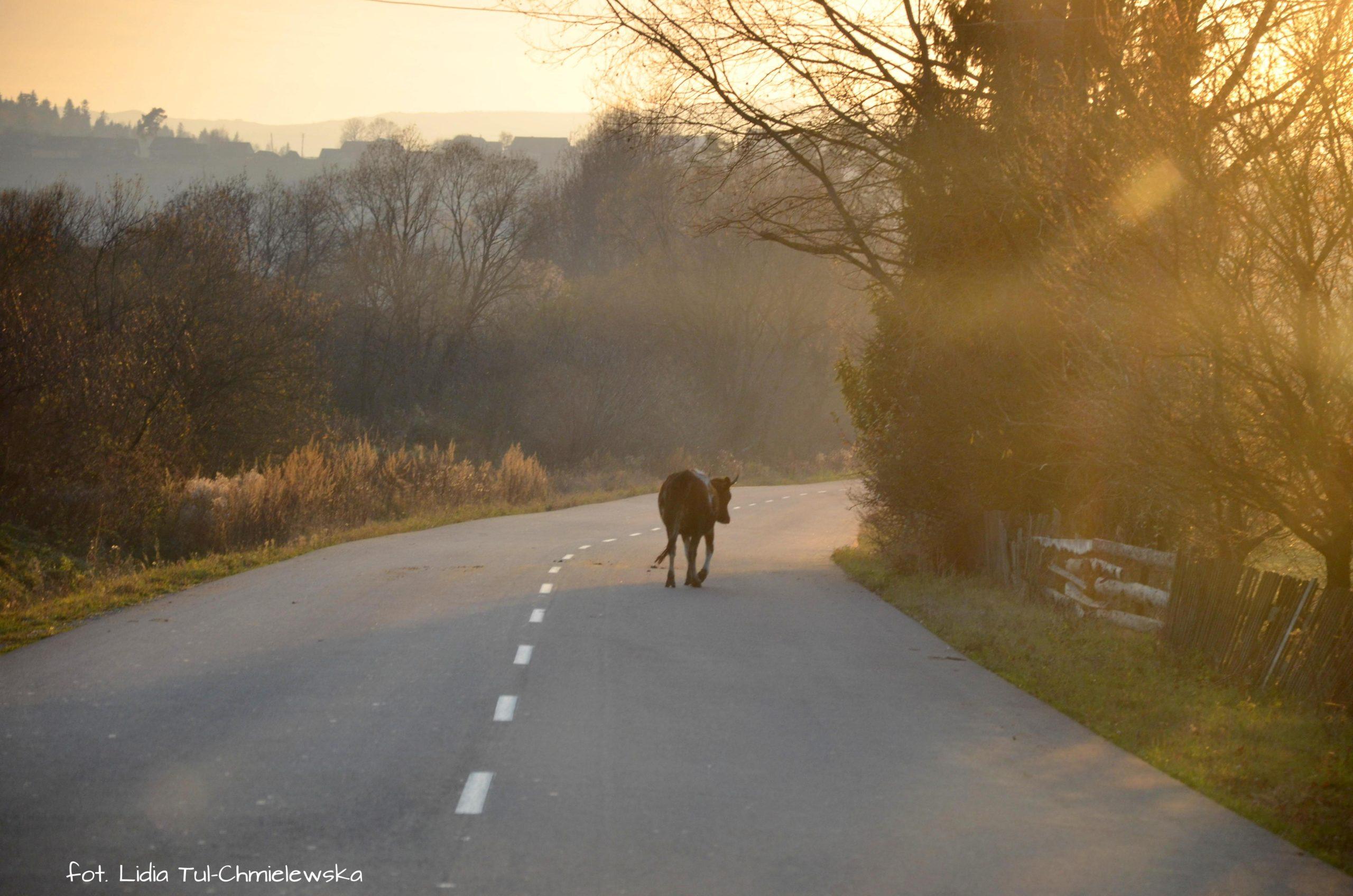 Na drogach Ukrainy fot. Lidia Tul-Chmielewska