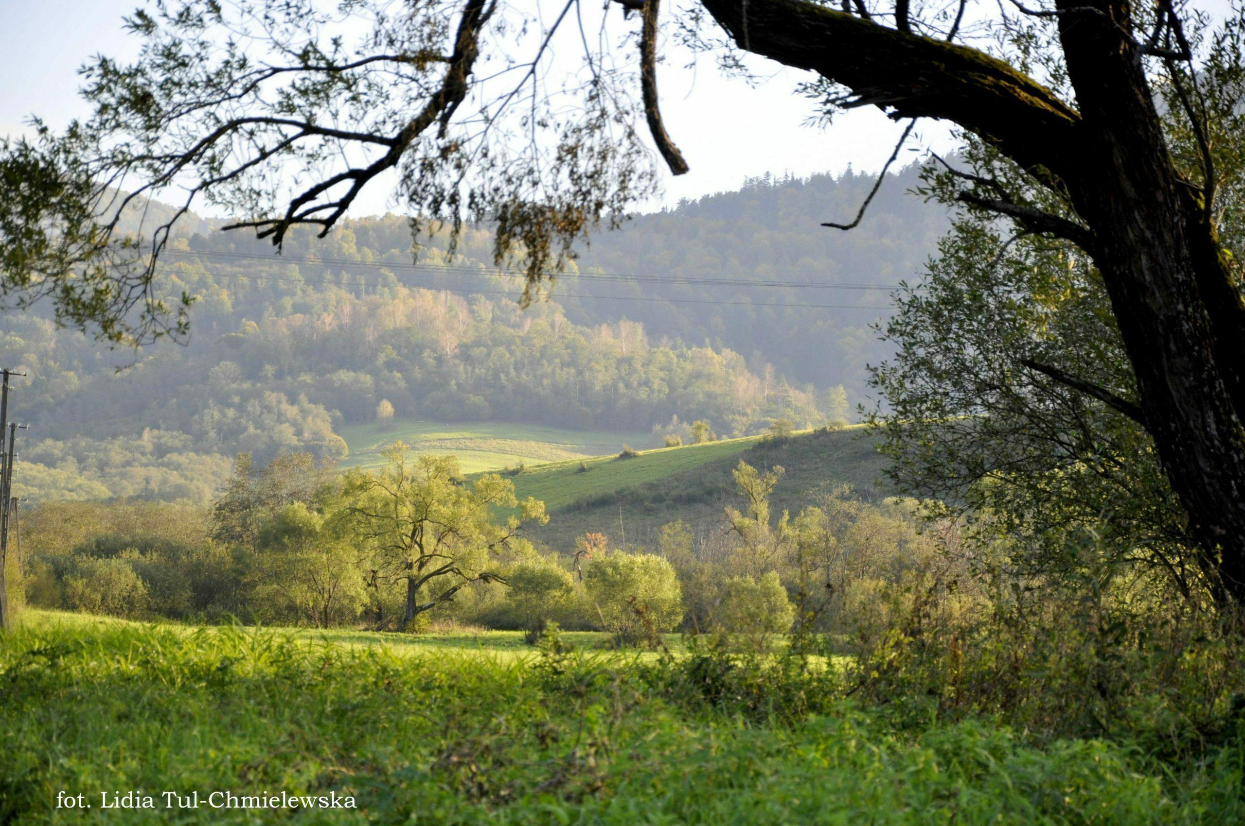Dolina Krywego fot. Lidia Tul-Chmielewska