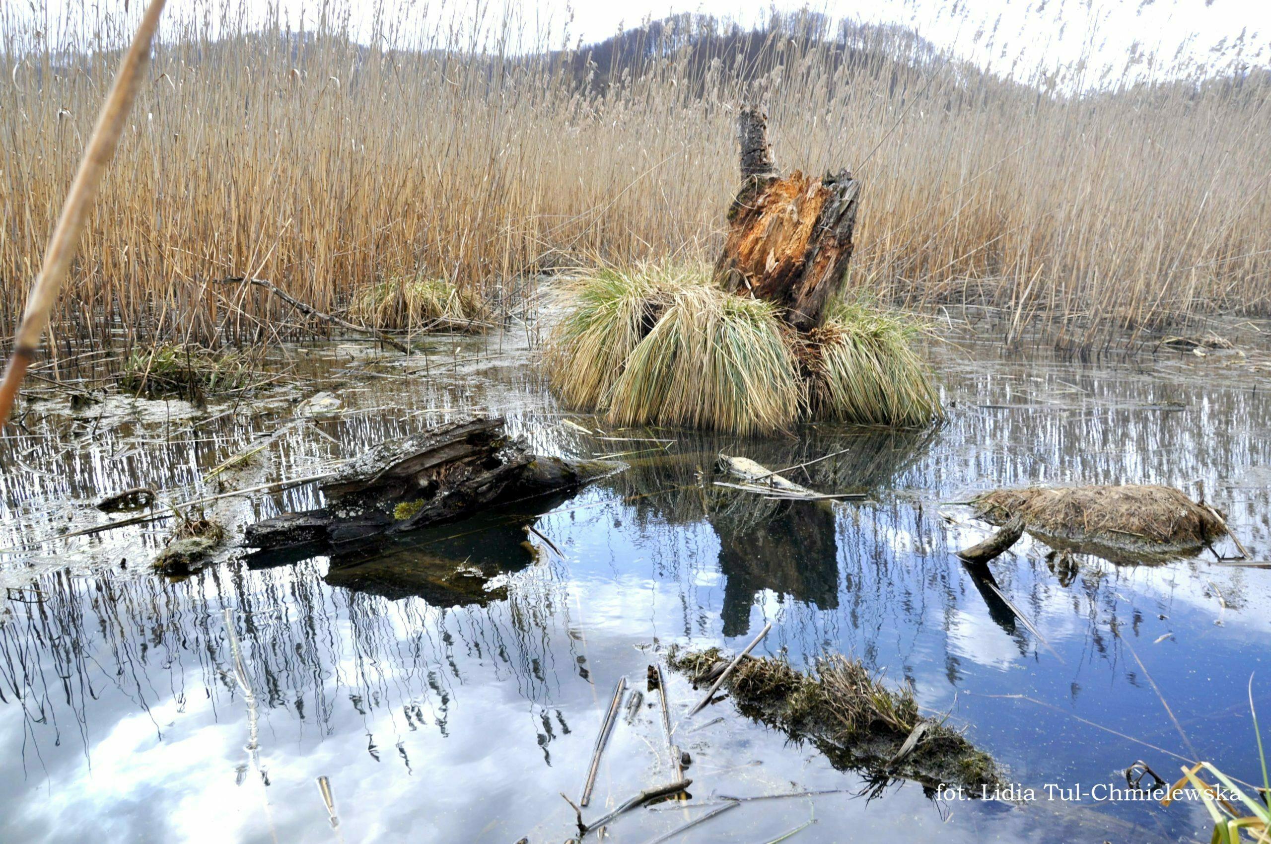 Tworylne i bobrowe rozlewiska fot. Lidia Tul-Chmielewska