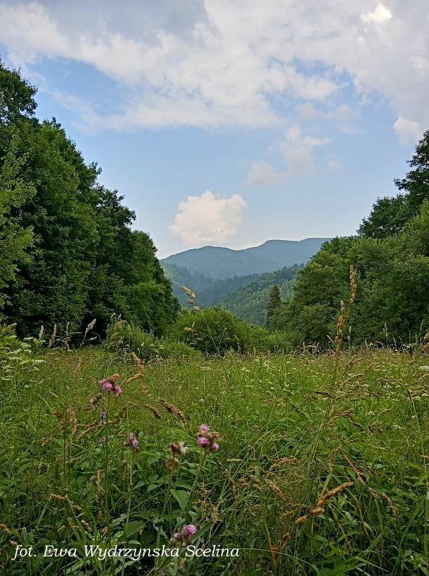 Nieliczne latem panoramy na trasie Dziki Hon fot. Ewa Wydrzyńska -Scelina